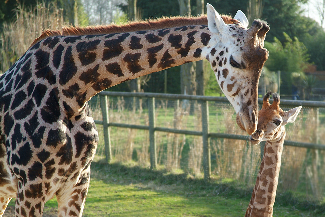 animaux du zoo