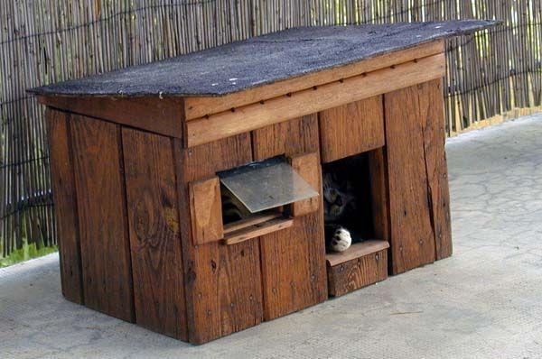 cabane chat