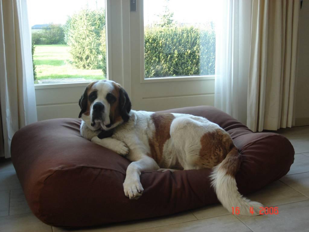 lit pour grand chien