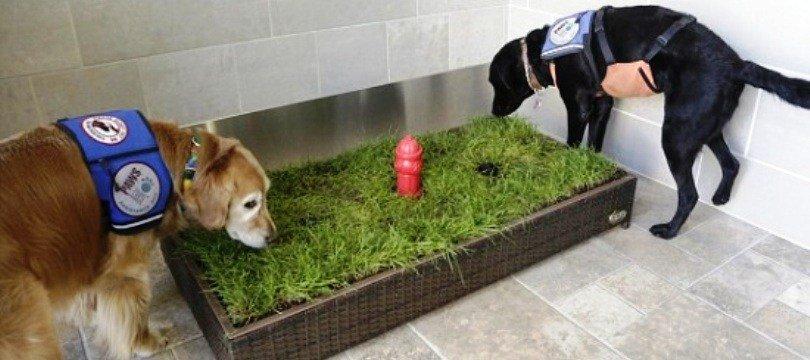 litiere pour chien