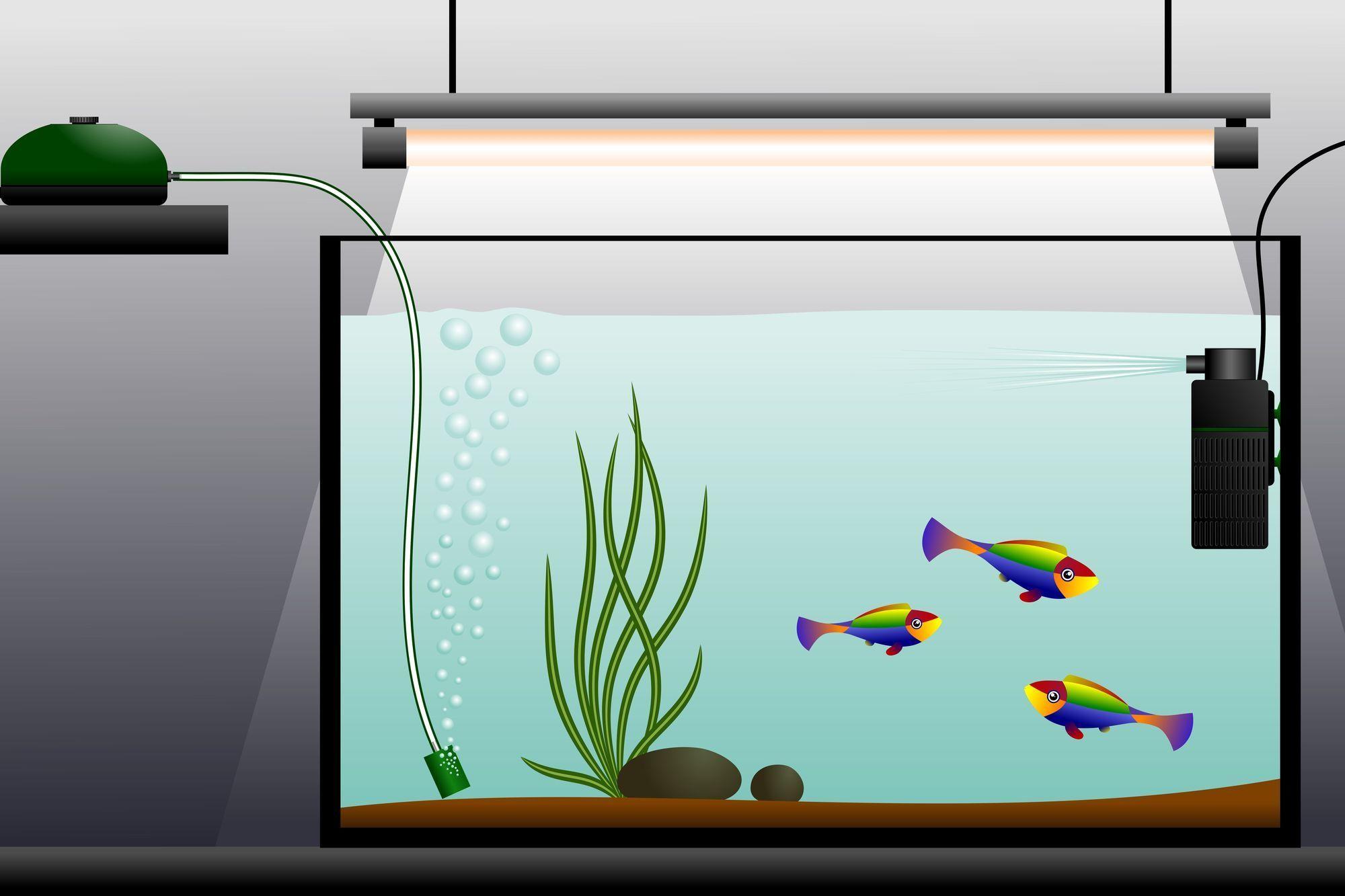materiel aquarium