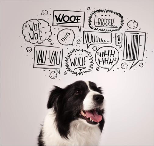 psychologie canine